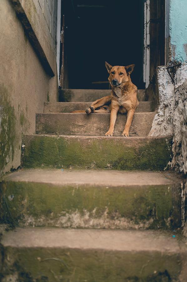 Toronto Dog Bite Lawyer